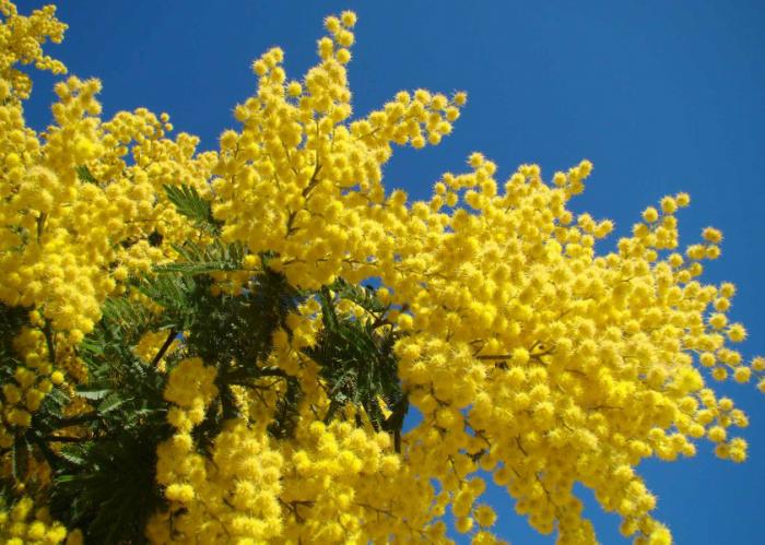 MakeUpForEver e il giallo mimosa